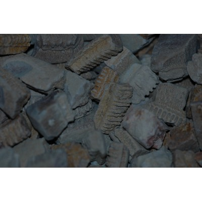 Fossiele Roggentanden - Batoidea