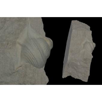 Aphorais