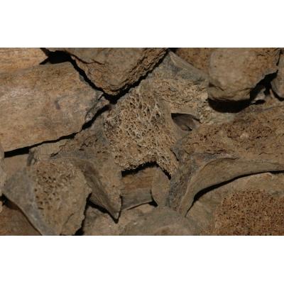 1. Botfragmenten Holenbeer