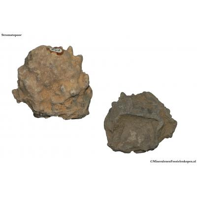 Stromatopoor