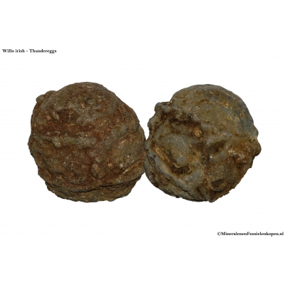 Willo iris Thundereggs (Gesloten)